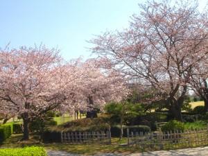 NO4 桜