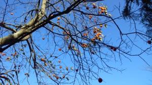 2番ホールバックティの柿
